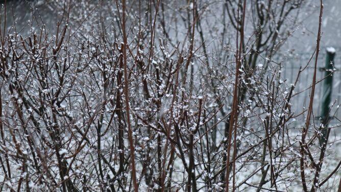 Pogoda na dziś: na ogół pogodnie, lokalnie może prószyć śnieg