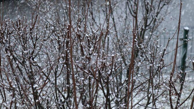Pogoda na dziś: spadnie śnieg, <br />miejscami tylko 4 stopnie