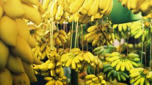 Banany są dobre na wszystko. Czy znacie ich wszystkie właściwości?