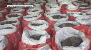 Udaremniono przemyt kości słoniowej